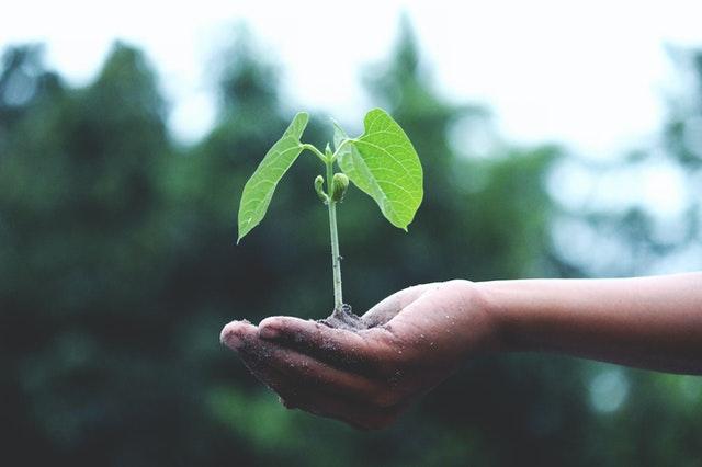 money plant advantage in house